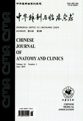 中华解剖与临床杂志